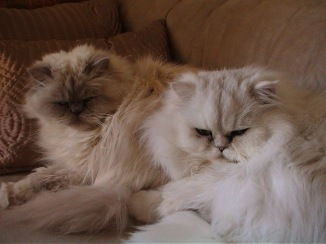 cats-lilly-and-ferdy-2_1