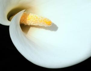 DSC_0593 Lilly Abbey Retreat - White masculine