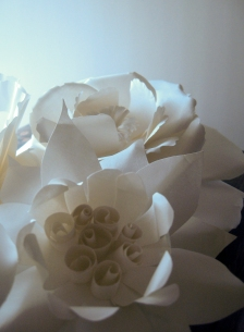 IMG_2461-flower pitcute 5