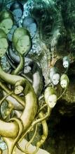 incubatIion green
