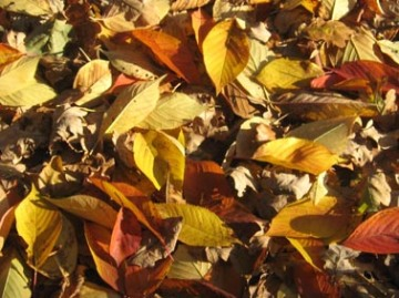 leaves scattered S