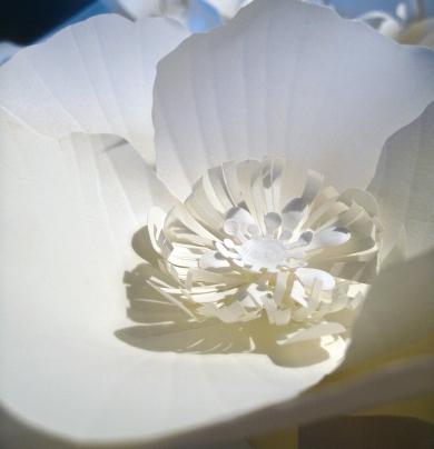 Paper poppy