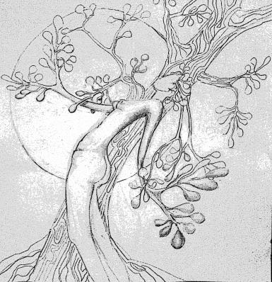 tree spirit outline